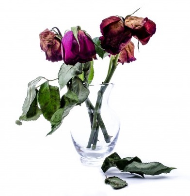 dried-red-roses