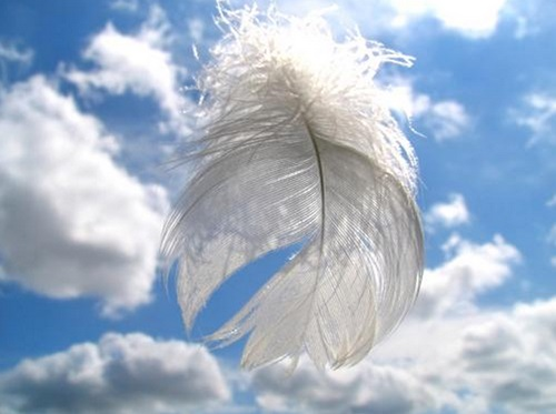 feather-in-sky